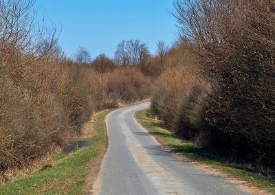 Feldweg bei Göldenitz