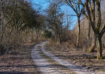 Waldweg bei Göldenitz